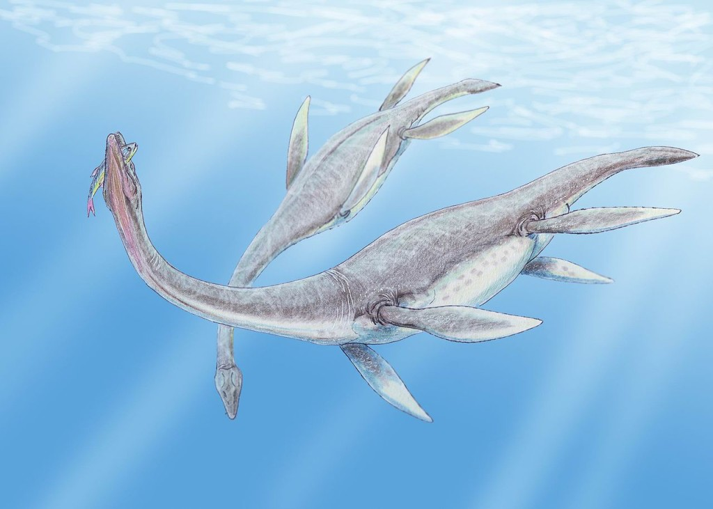 """Plesiosaurus 3DB"" by Creator:Dmitry Bogdanov - dmitrchel@mail.ru. Licensed under CC BY 3.0 via Wikimedia Commons - http://commons.wikimedia.org/wiki/File:Plesiosaurus_3DB.jpg#/media/File:Plesiosaurus_3DB.jpg"